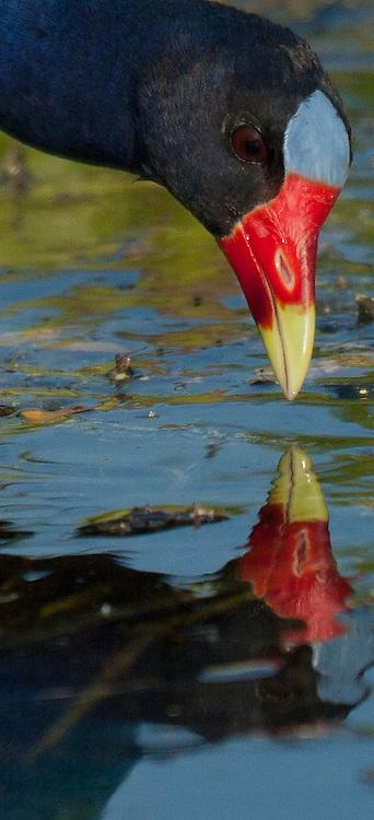 Lake Panasoffkee, Florida