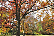 Fall tree colors on the campus of Michigan State Univeristy