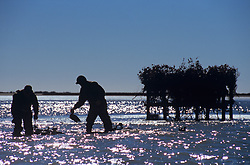 Stock photo of two men collecting duck decoys from the lake