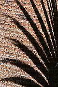 Palm fronds cast a shadow on a reddish bark Palm tree.