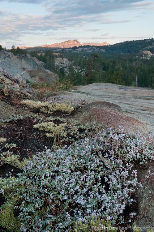 Morning alpenglow on Deadwood Peak, Sierra Nevada, Toiyabe National Forest, California
