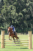 Young female rider on a chestnut horse at a hurdle race