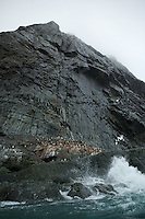 Chinstrap Penguin colony on Elephant Island, just at the base of Point Wild.
