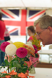 Man looking at dahlias in flower show at Melpash Agricultural Show Bridport Dorset August 2004 UK