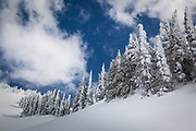 Hoar frost on trees along Mazama Ridge at Mount Rainier in the winter