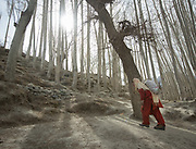 Zamrad Begum<br /> Nasib Sultan, returning with potatoes after cutting wood, in Zor Abad, a winter pasture two hour walk from Hussaini village, across the Hunza valley riverbed. Gojal region.