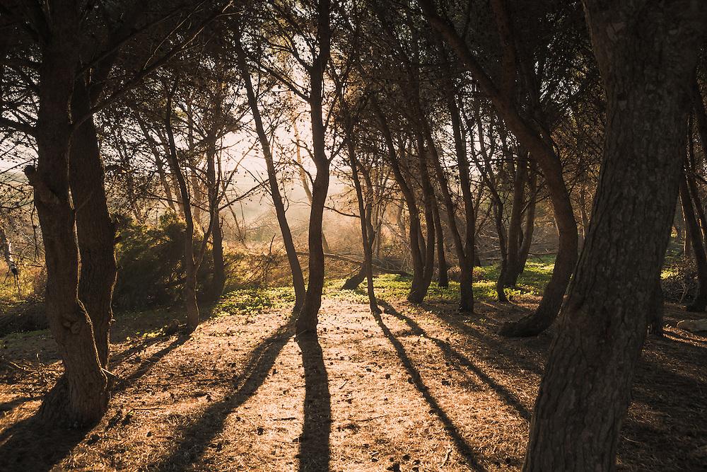 Fog Wood