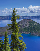 Wizard Island in Summer and Mountain Hemlock, <br /> Crater Lake National Park, Oregon