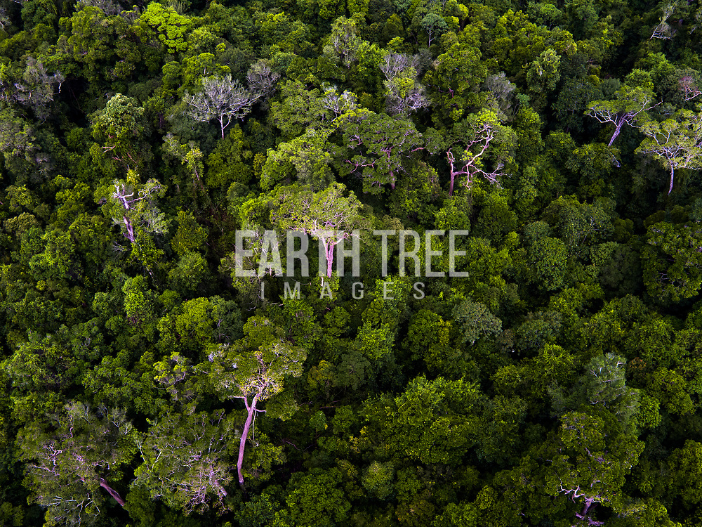 Singkel peat swamp from Above, Trumon, Leuser Ecosystem, Indonesia. 14th August 2016. Lat: 2,44.3859N Long: 97,39.5139E.  Photo: Paul Hilton for RAN   Photo: Paul Hilton for RAN Forest cover, Leuser Ecosystem, Sumatra, Indonesia. The Leuser Ecosystem is home to the largest extent of intact forest landscapes remaining in Sumatra and it is among the most biologically abundant landscapes ever described. Photo: Paul Hilton for Earth Tree Images