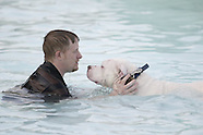 2008 - Dog Day at the Pool