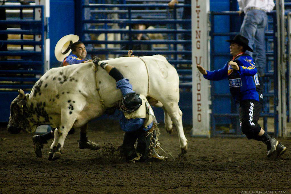 Ricky Aguiar, from Turlock, CA, gets stuck in his rope after riding Bull Frog during the PBR rodeo at the Del Mar Fairgrounds in Del Mar, California on July 26th, 2008.  Aguiar walked away from the mishap.