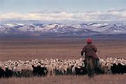 Herding livestock<br /> near Ulaanbaatar<br /> Mongolia