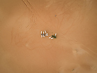 Aerial view above of group of goats eating on desert landscape, Abu Dhabi, U.A.E
