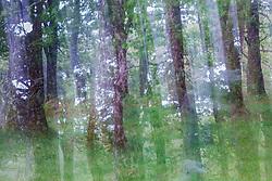 Trees in forest, Sheeffrey Wood, Sheeffrey Hills, County Mayo, Ireland