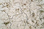 Nederland, Kekerdom, 18-5-2020 Een opgedroogde drooggevallen sloot in de ooijpolder . Door de aanhoudende en langdurige droogte dreigt er nu alweer een watertekort voor de landbouw . Foto: Flip Franssen