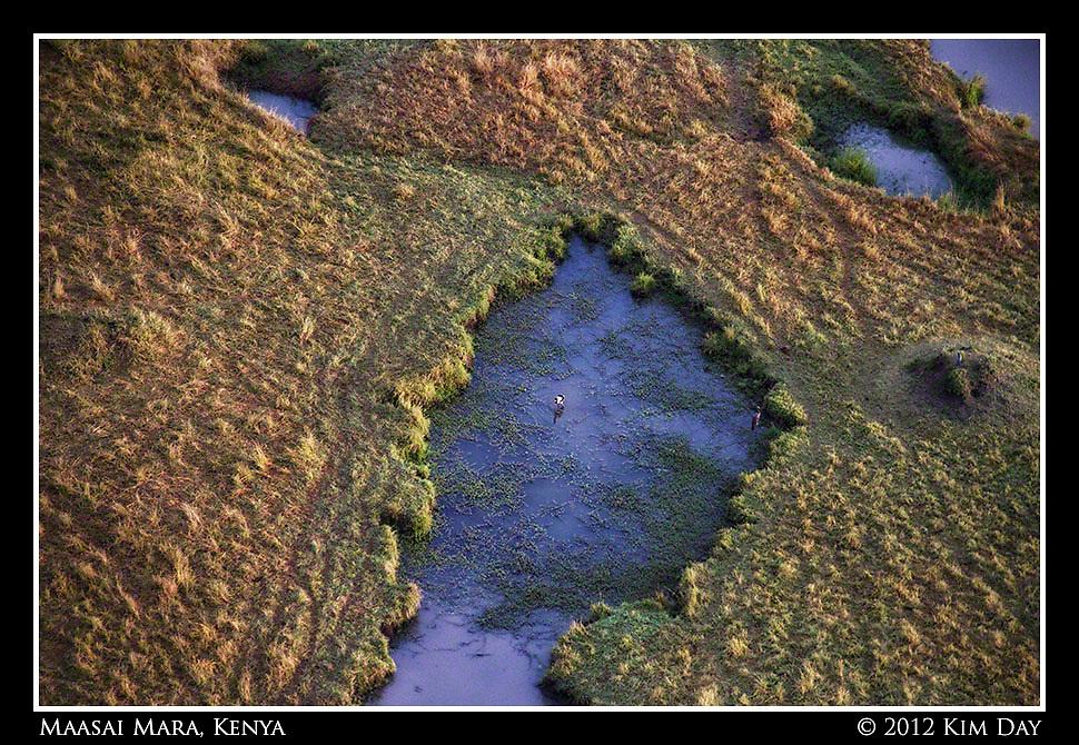 Watering Hole In Maasai Mara.Maasai Mara, Kenya.September 2012