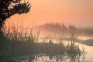 Misty orange fog at sunrise over tule reeds and water, Jones Tract, San Joaquin delta, near Stockton, California