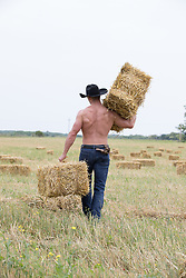 muscular shirtless cowboy carrying hay bales in a field