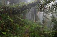 Cloud forest, Yushan National Park, Taiwan