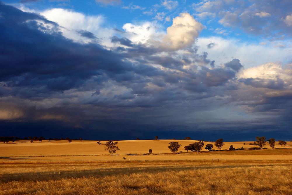 Wheat fields in New south wales, Australia. <br /> Photo by Lorenz Berna