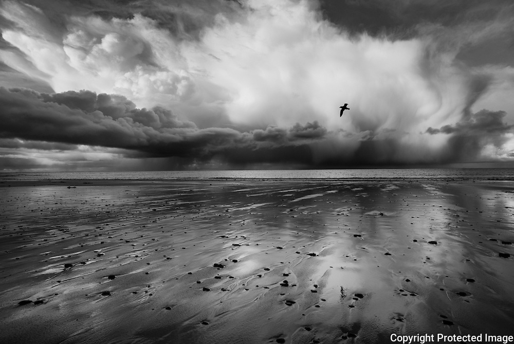 A Fulmar flies through the frame of a winter sky above a beach on the island of Sanday.
