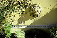 Winery Lion and Shadows