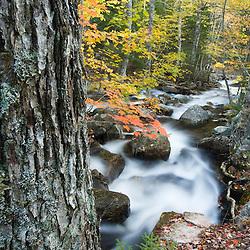 Jordan Stream in fall in Maine's Acadia National Park.  Sugar maple trees.