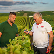 Michel Bautrait (R) with Jeremy Labeau at Champagne Mumm's vineyard in Mailly.