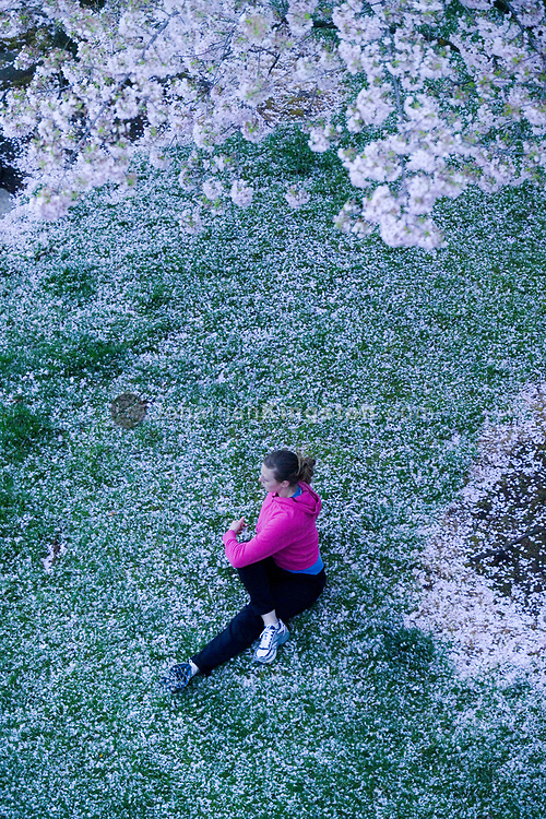 A young woman, stretches after running under blossoming ornamental cherry trees near downtown Portland, Oregon, USA.  The trees are located along the Tom McCall waterfront near the Columbia River. (Model Released)