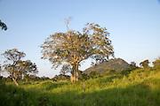 Lowland dry forest vegetation, Hurulu Eco Park biosphere reserve, Habarana, Anuradhapura District, Sri Lanka, Asia