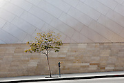 Tree & parking meter in front of  Walt Disney Concert Hall, Los Angeles
