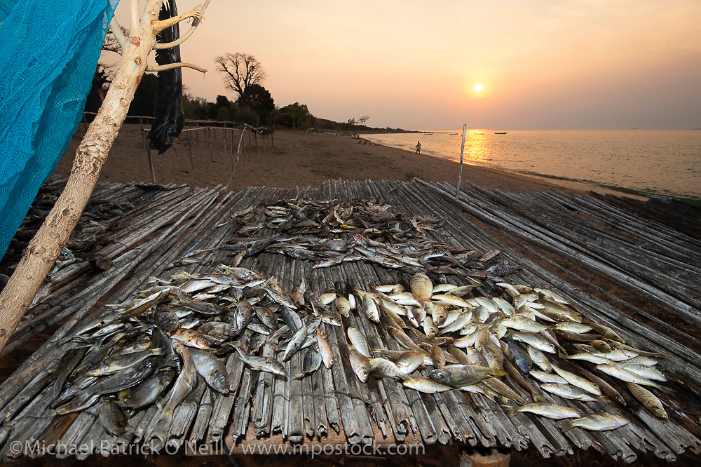 A fresh catch of assorted cichlid species dries in the hot sun in Likoma Island, Lake Malawi, Malawi, Africa.