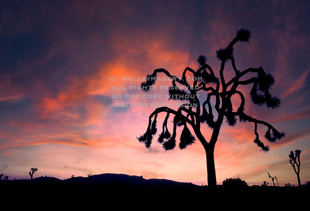 Image of Joshua Tree National Park in southeastern California, American Southwest by Randy Wells