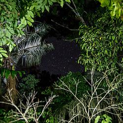 """""""Floresta (paisagem) fotografado em Linhares, Espírito Santo -  Sudeste do Brasil. Bioma Mata Atlântica. Registro feito em 2015.<br /> <br /> <br /> <br /> ENGLISH: Forest Landscape photographed in Linhares, Espírito Santo - Southeast of Brazil. Atlantic Forest Biome. Picture made in 2015."""""""