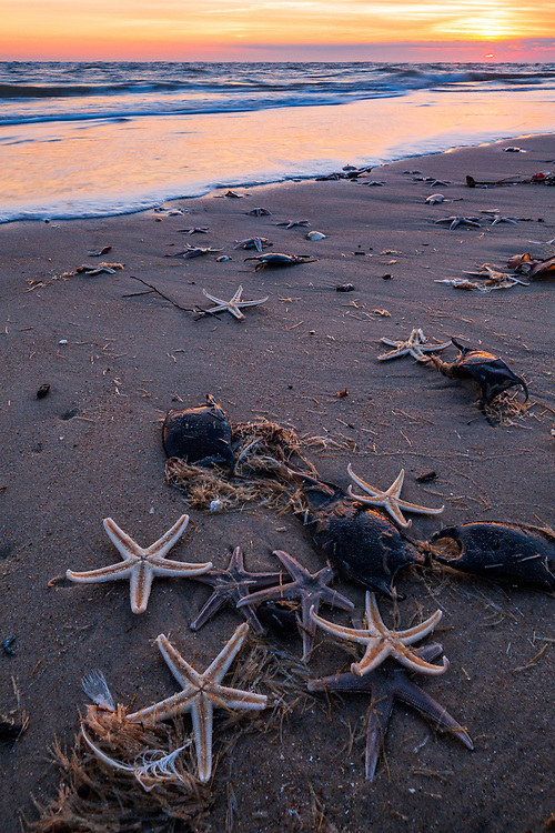 Sunset surf and Sea Stars, Cape Point
