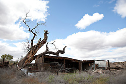 fallen Cottonwood Tree against an old barn in New Mexico