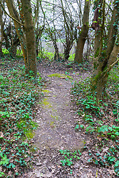 well trodden earth and signs of recent use indicate a dogging spot - a place where people meet to have sex with strangers, just off the A26 at Eridge near Tonbridge Wells in Kent. March 27 2019.