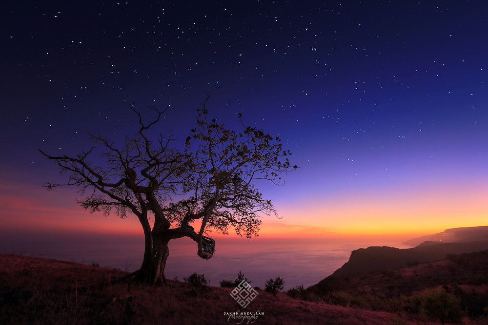 It is the first time that I stand in front of the ocean in a quick visit to Oman.<br /> I have attracted by the high mountains, which may rise up to 1200m above sea level and was close to the sea.<br /> I found this tree to connect between the mountains and the ocean in a beautiful scene.