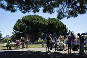 Family and friends share food with Nob HIll Foods employees during a Nob Hill Foods farewell BBQ at Strickroth Park in Milpitas, California, on May 15, 2016. (Stan Olszewski/SOSKIphoto)