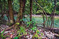 Lowland rainforest, Karawawi River, Kumawa Peninsula, mainland New Guinea, Western Papua, from the book PAPUA - AMONG BIRDS OF PARADISE AND MANTA RAYS