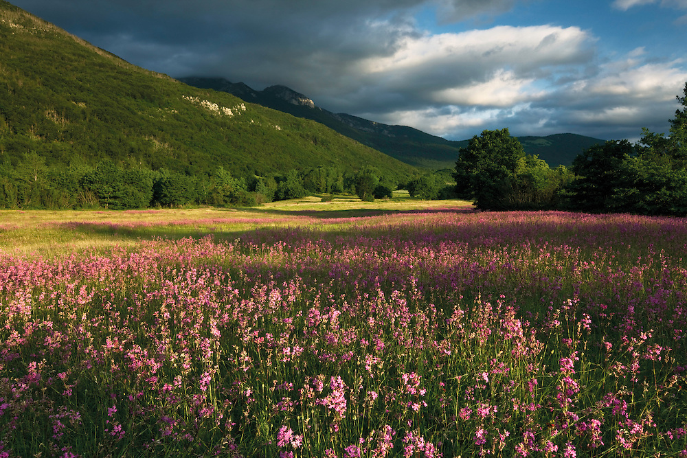 Meadows with flowering sticky catchfly (Silene viscaria) and the slopes of the Dinara mountain range. Gubin area. Livansko Polje. May 2009. Bosnia-Herzegovina. <br /> Elio della Ferrera / Wild Wonders of Europe