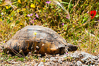 Athens, Greece. View from the Areopagus area below the Acropolis.  A turtle.