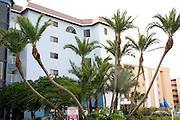Condominiums and palm trees along Gulf of Mexico coast.  Indian Shores Tampa Bay Area Florida USA