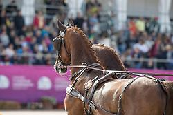 Geerts Glenn, BEL, Dash, De Solist, Erdball, Scampolo<br /> FEI European Driving Championships - Goteborg 2017 <br /> © Hippo Foto - Dirk Caremans