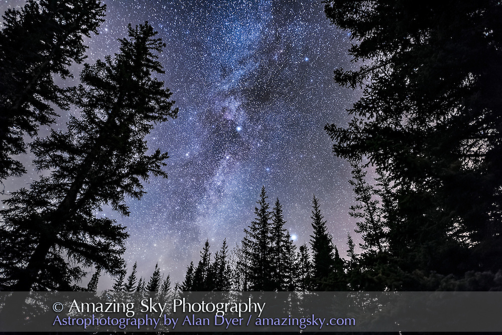 Cygnus or the Northern Cross is setting amid the pine trees at Athabasca Falls in Jasper National Park, on a late October night. Cepheus is above and the bright star Vega is low and just above the trees. Deneb is at centre, as is the dark nebula Lynds 3, the Funnel Cloud Nebula. Light cloud adds the natural star glows but also discolours the sky near the horizon.<br /> <br /> This is a stack of 7 exposures for the trees, mean combined to smooth noise, and one exposure for the sky, all untracked, and all 25 seconds at f/2 with the 20mm Sigma lens and Nikon D750 at ISO 6400.