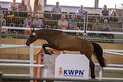 018, Miss Holland EB<br /> Nationaal Kampioenschap KWPN<br /> 3 jarige springmerries<br /> © Hippo Foto - Dirk Caremans<br />  15/08/2020