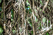 Abstract foliage close up of tangled twigs, branches and leaves