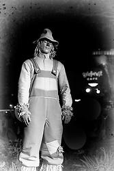The scarecrow at downtown Disney in Orlando, Florida.