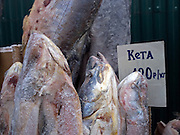 Detail of standing and deep-frozen fish on the Yakutsk outdoor fish market. Yakutsk is a city in the Russian Far East, located about 4 degrees (450 km) below the Arctic Circle. It is the capital of the Sakha (Yakutia) Republic (formerly the Yakut Autonomous Soviet Socialist Republic), Russia and a major port on the Lena River. Yakutsk is one of the coldest cities on earth, with winter temperatures averaging -40.9 degrees Celsius.