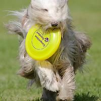 Flydogs frizbee euro championships 2009